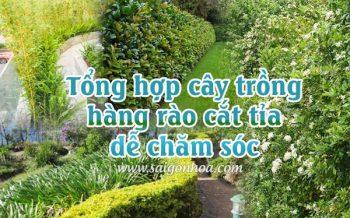 Cay Hang Rao De Cham Soc
