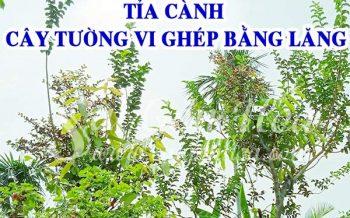 Cham Soc Tuong Vi Ghep Bang Lang