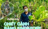 Chiet Canh Bang Sing