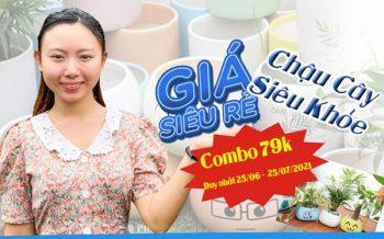 Combo Chau Cay Sieu Khoe 79K