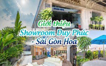 Gioi Thieu Showroom Duy Phuc