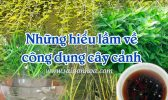 Hieu Lam Ve Cay Canh