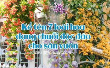 Hoa Dang Chuoi San Vuon