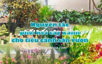 Nguyen Tac Phoi Cay Tieu Canh