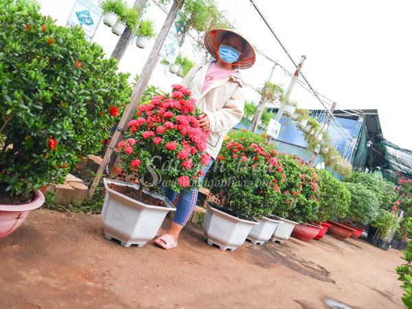 Nơi Bán Trang Thái