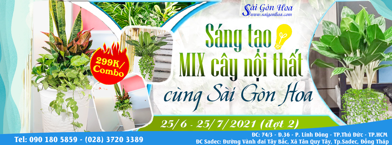 Sang Tao Mix Cay Noi That Dot 2
