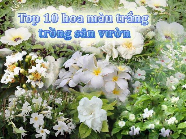 Top 10 Hoa Màu Trắng Cho Sân Vườn