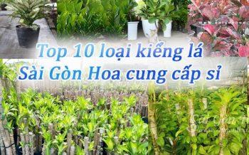 Top 10 Kieng La Cung Cap Si Tai Sai Gon Hoa 2