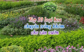 Top 10 Loai Hoa Trong Khom