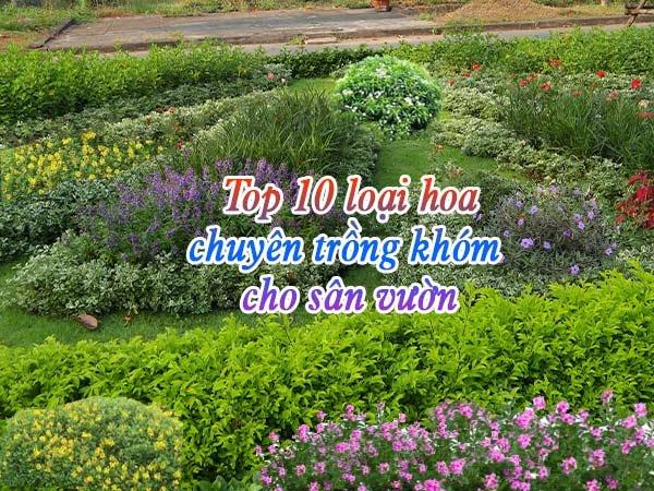 Top 10 Loại Hoa Trồng Khóm Cho Sân Vườn