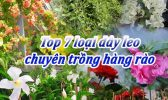 Top 7 Loai Day Leo Trong Hang Rao