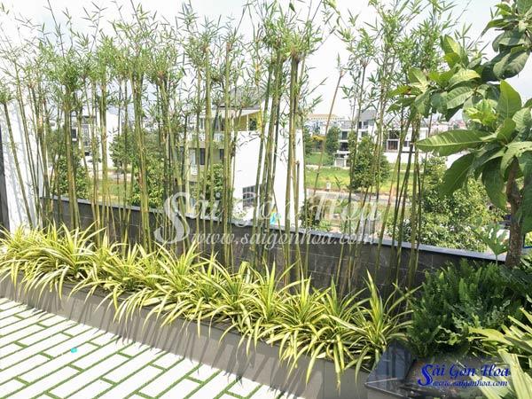 9 Loại Cây Phong Thủy Trồng Sân Thượng Hứng Lộc