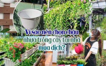 Vi Sao Chon Chau Nhua