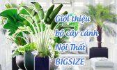 Bo Cay Canh Noi That Bigsize