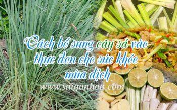 Bo Sung Cay Sa Vao Thuc Don