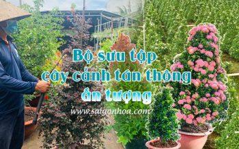 Bo Suu Tap Cay Canh Tan Thong