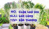 Bo Suu Tap Hoa Leo San Thuong