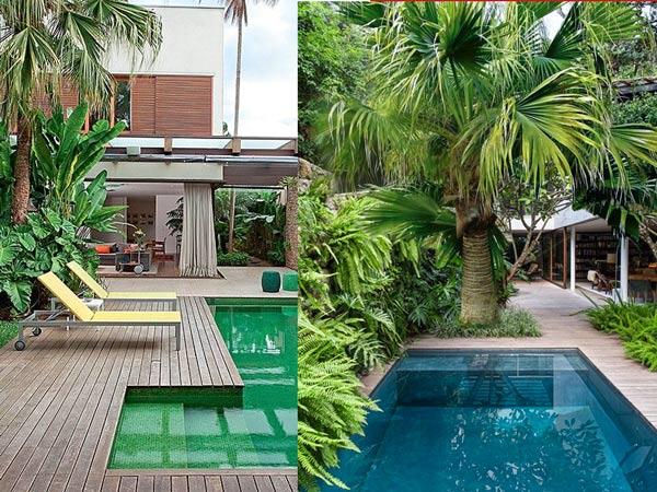 Cay Co Ta Trong Trang Tri Ho Boi