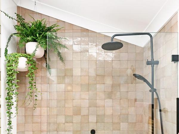 Giới Thiệu Các Loại Cây Cảnh Trồng Trong Phòng Tắm
