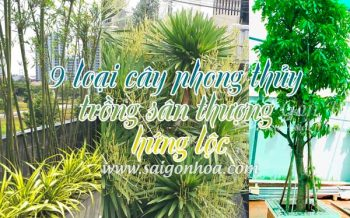 Cay Phong Thuy Hung Loc