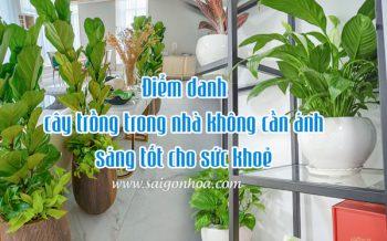 Cay Trong Trong Nha Khong Can Anh Sang