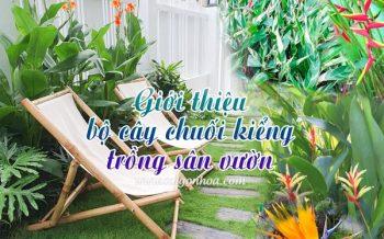 Gioi Thieu Bo Chuoi Kieng