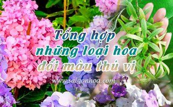 Hoa Doi Mau