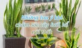 Luu Y Cham Soc Luoi Ho Noi That