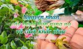 Nguyen Nhan Cay Bong Bup Rung Nu