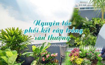 Nguyen Tac Cay San Thuong