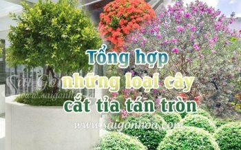 Tong Hop Cay Cat Tia Tan Tron