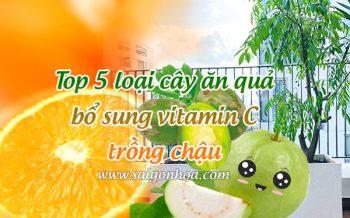 Cay An Trai Bo Sung Vitamin C