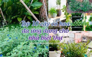 Cay Co Hoa Da Ung Dung Biet Thu