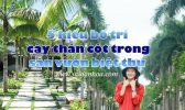 Cay Than Cot Trong San Vuon