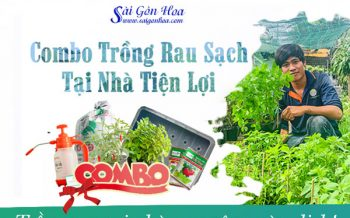 Combo Rau Sach Tien Loi