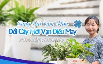 Cung Sgh Doi Cay Noi That