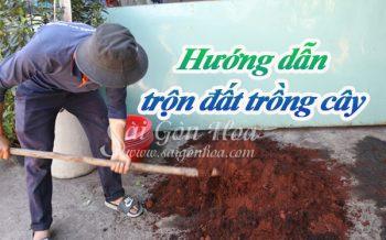 Huong Dan Tron Dat Trong Cay