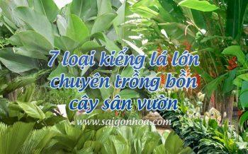 Kieng La Lon Trong Bon San Vuon
