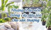 Ly Do Trong Cay Day Leo