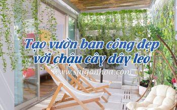 Tao Vuon Ban Cong Dep Cay Day Leo