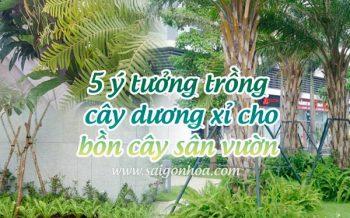 Trong Cay Duong Xi Bon Cay