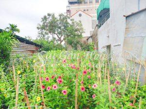 3 Yếu Tố Cơ Bản Làm Nên Thiết Kế Cảnh Quan Sân Vườn Hoàn Chỉnh