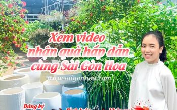 Xem Video Nhan Qua Sai Gon Hoa