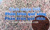 Cach Nhan Biet Phan Trun Que