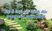 Cay Canh Dac Trung Vuon Nhat
