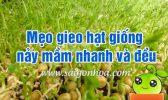 Meo Gieo Hat Giong