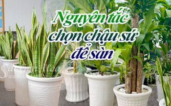 Nguyen Tac Chon Chau Su De San