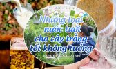 Nuoc Tuoi Cho Cay Trong Tot