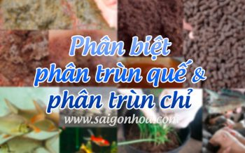 Phan Trun Que Phan Trun Chi