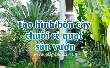 Tao Hinh Bon Cay Chuoi Re Quat